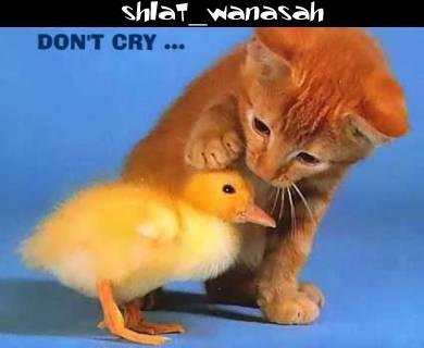 صور حيوانات - صور حيوانات مضحكة - صور حيوانات أليفة  Funny_pictures_batkhelacom_30
